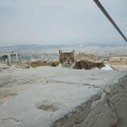 Kat in Griekenland