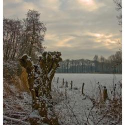 Winter Art 15 knotwilg