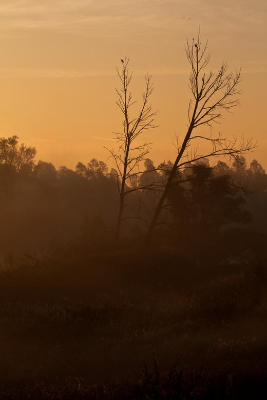 Oranje - Oranje gloed over het landschap terwijl er nog wat mist is<br /> <br />