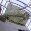 Potvis NHM Rotterdam 3D Gopro