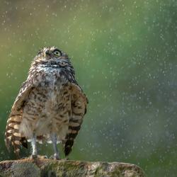 Nee hè, regen!