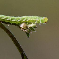 Zo groen, zo klein..