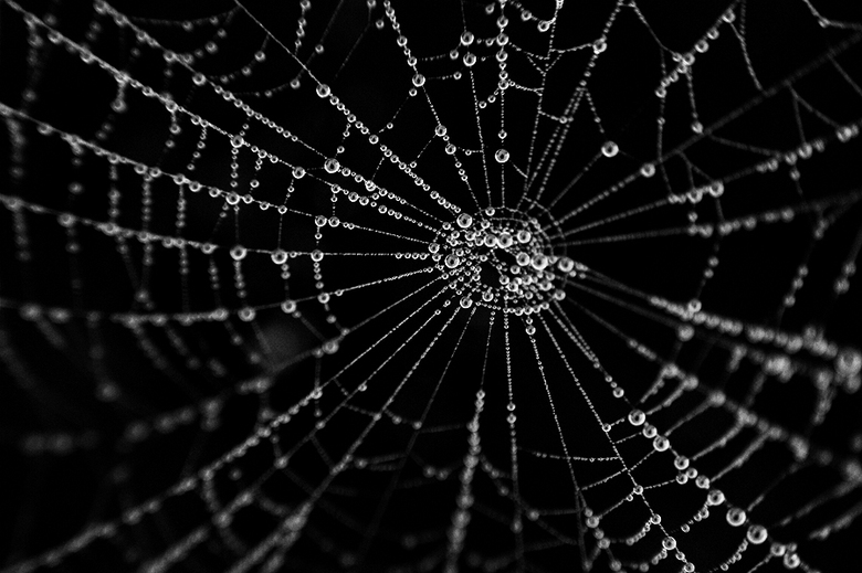 Spiderdrips - Een web met druppels, zo'n 2 weken geleden genomen op de Oirschotse Heide.