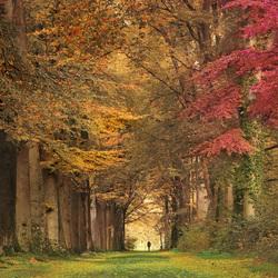 Een wandeling in herfstsfeer