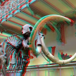Musee Naturelle Histoire Paris 3D