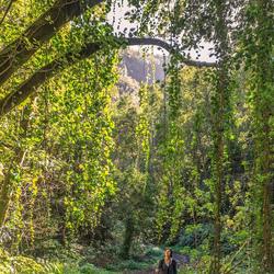 in het laurierbos op La Palma