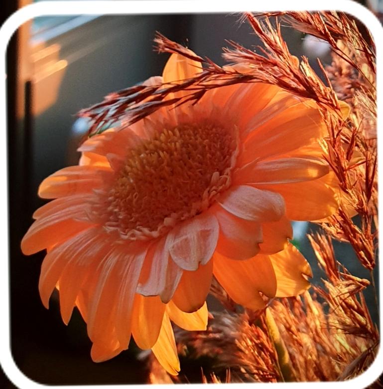 Zonsondergang - De zon ging onder en scheen nog net op deze bloem gr Bets