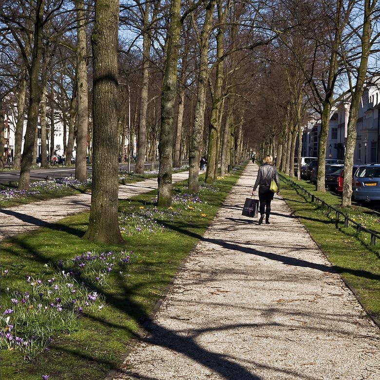 Voorjaar - Vandaag in Utrecht door en langs enkele parken gelopen.<br /> Dit is de Maliebaan.