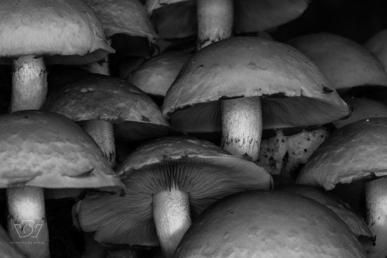 Zwart witte paddenstoeltjes -