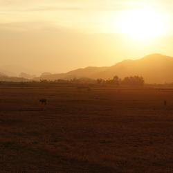Sunset Grazers