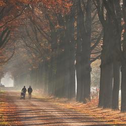 Herfstmorgen in de Wiersse, Vorden