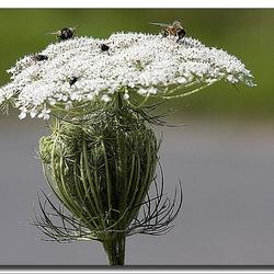 het verhaal van de bloemetjes en de bijtjes