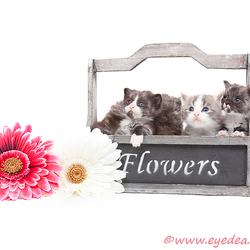 Cat Flowers....