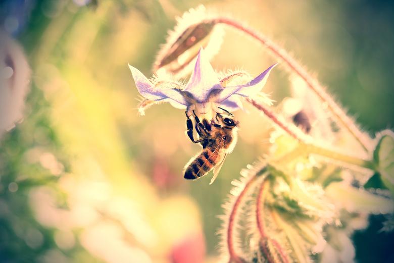 Endangered beauty -