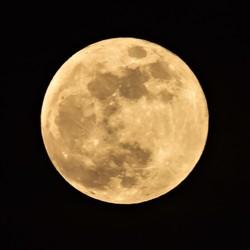 Blauwe maan-dag......