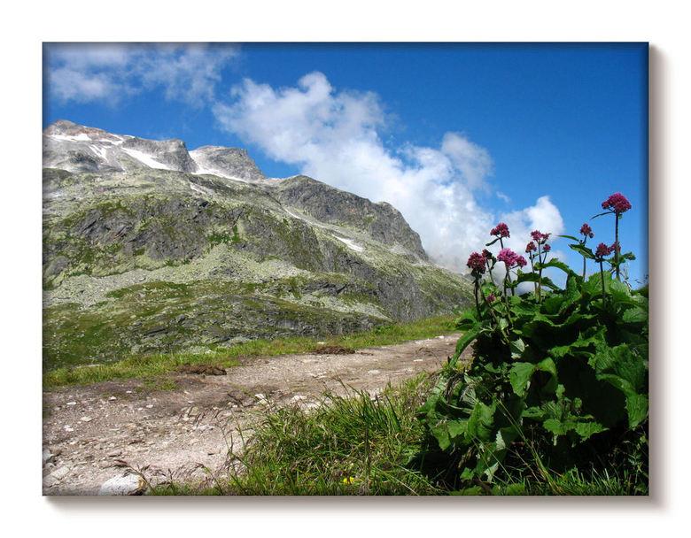 Hoge 'druk' ... - Een van vorig jaar: Stubachtal Oostenrijk op 2400 meter hoogte. Ook daar lopen nog koeien, getuige beelden van het pad. Prachtig dal