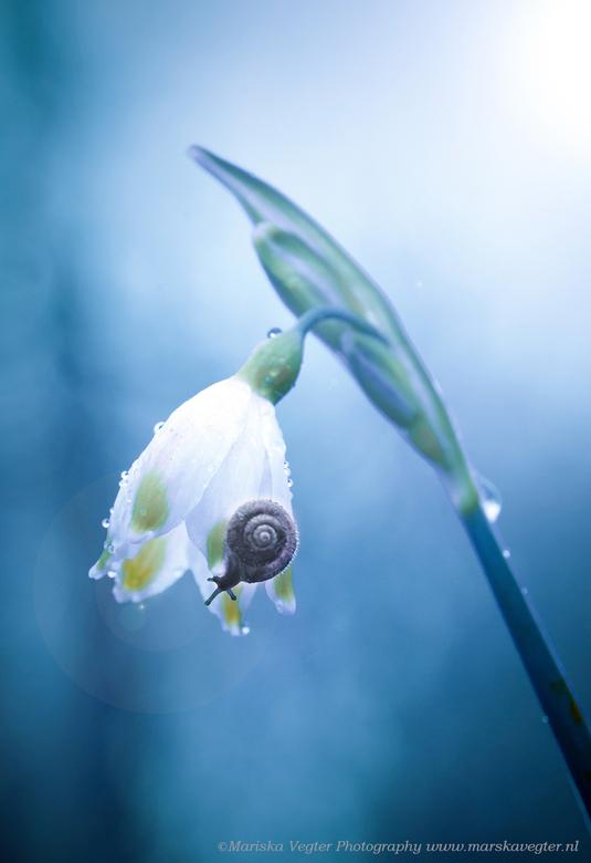 Rainy spring - Een regenachtige lentedag.