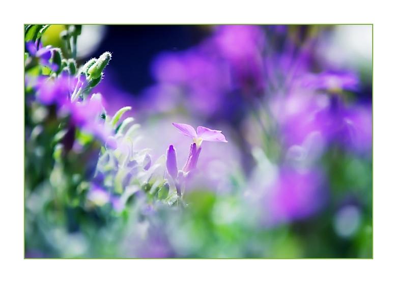Little.  - Nikon D60 + Nikkor 55-200mm 5.6 <br /> In de tuin met een beetje zon.