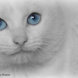 Bailey 'Blue eyes'