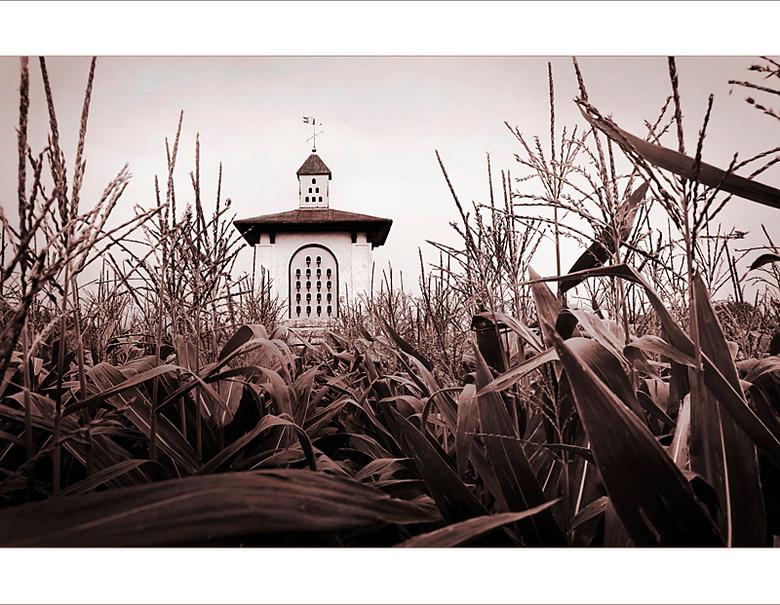 Children of the corn... - Stephen King...