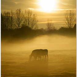 Grazen in de mist