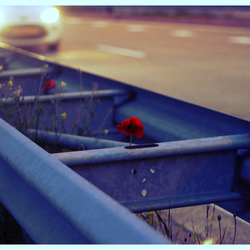 Highway flower