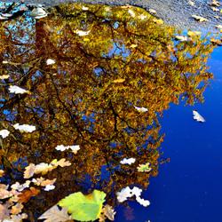 Herfst laag bij de grond