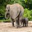 Olifantenmoeder met haar kroost