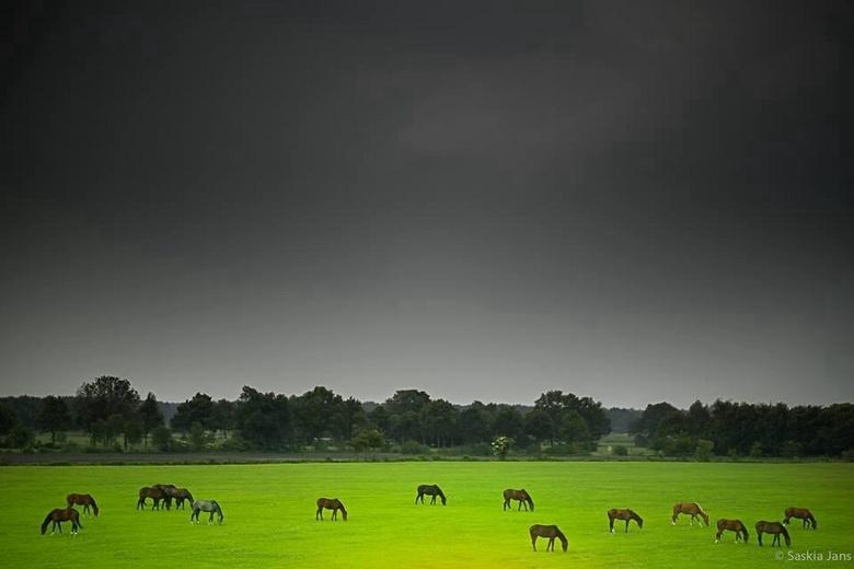 Voor de regen... - Stonden er 17 paarden naar rechts en 1 naar links...