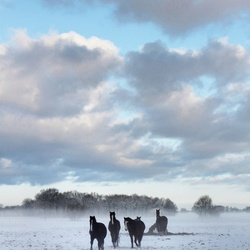 Horses in snowworld