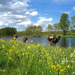 Fotograaf4U - Natuur in de Lente