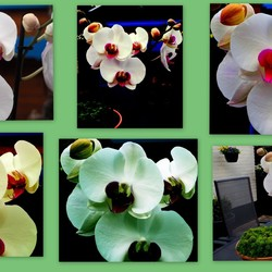 Orchideën in verschillende bewerkingen.