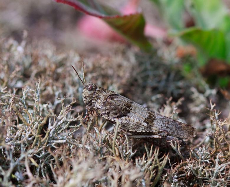 Master in disguise - Geweldig hoe deze sprinkhanen in hun omgeving opgaan.<br /> Dit mos was trouwens zeer onprettig om met je ellebogen op te liggen