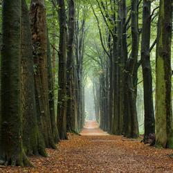 Herfst op de Utrechtse Heuvelrug