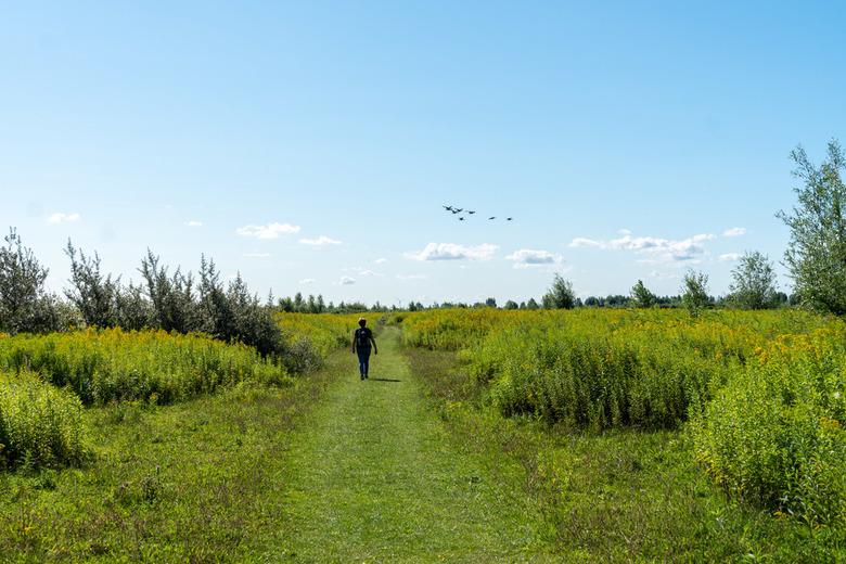 Wandelen in natuurgebied Tiengemeten - Natuurgebied Tiengemeten. Een echt eiland dicht bij Rotterdam. Een eiland vol vogels waar je heerlijk kunt wand