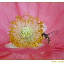Zweven op een roze wolk