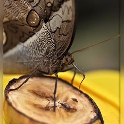 Menu: Banaan met Vlieg