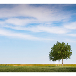 Trees in the field