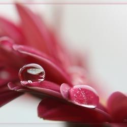 Drops on a flowerleaf