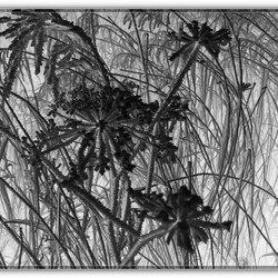 Riet en uitgedroogde bloemen