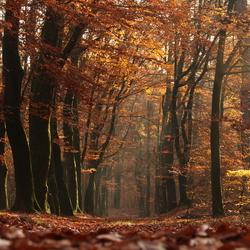 Magisch herfstbos