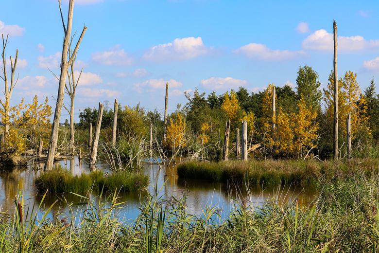 oud bos - nabij de zevenhuizerplas.