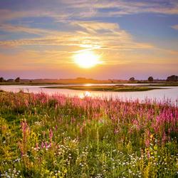 Wilde bloemen tijdens zonsondergang