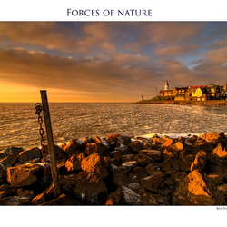 Forces of Nature 5