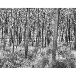 Bos langs de Po - Italië