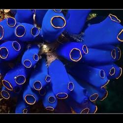 Blauwe zakpijpen