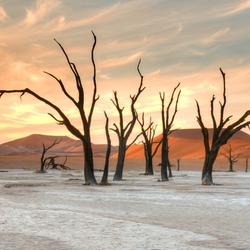 Dode bomen groep bij  zonsondergang