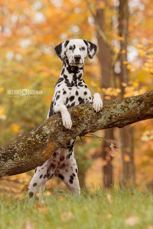 Pup Izzy...
