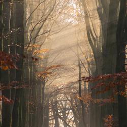 Zonnestralen door de mist