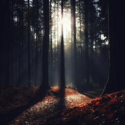 Go for a walk in the mysterious forest